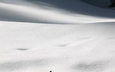 Zimowy weekend w Nieprześni